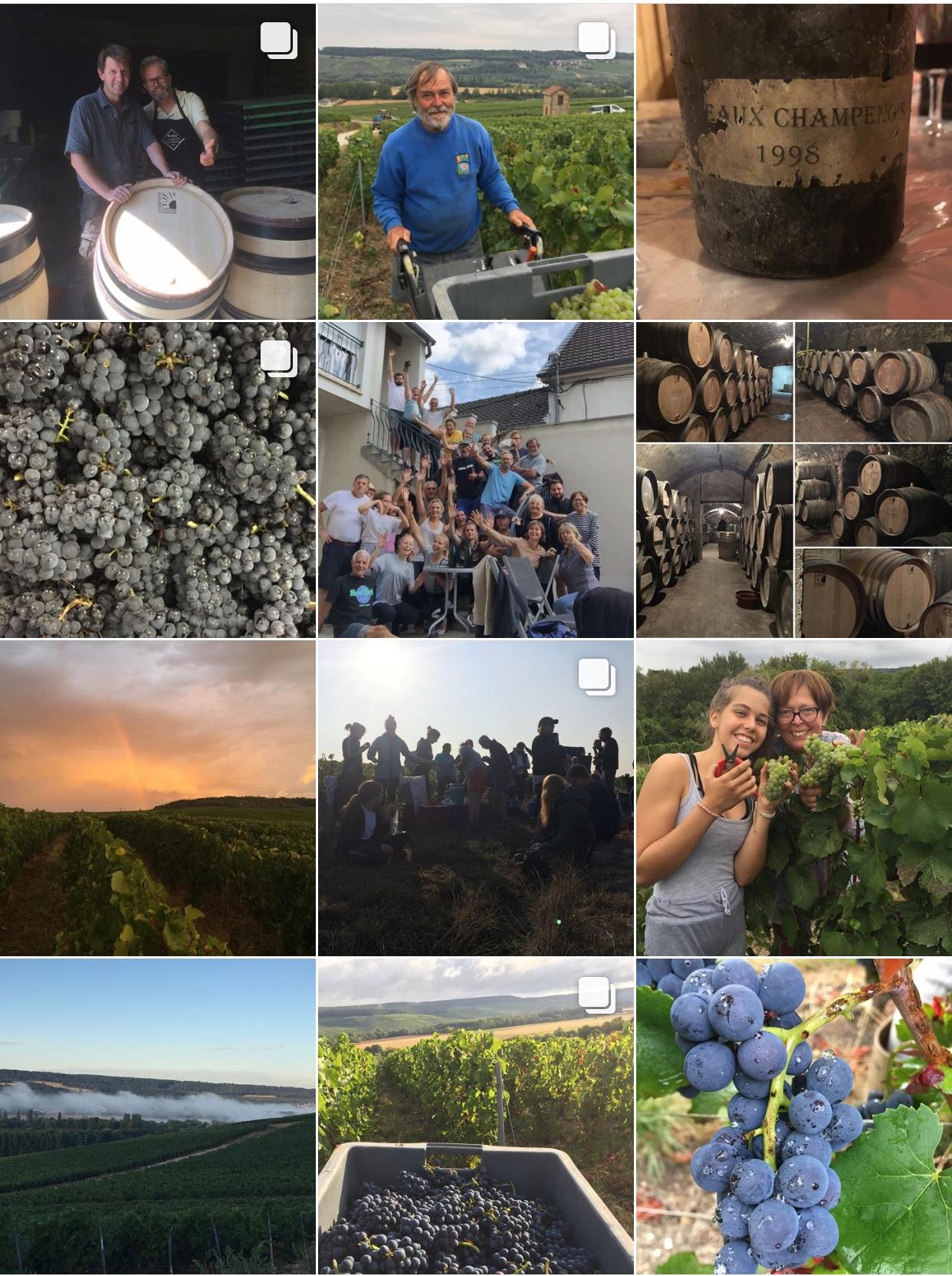 Vendanges 2018, images Instagram, réseaux sociaux