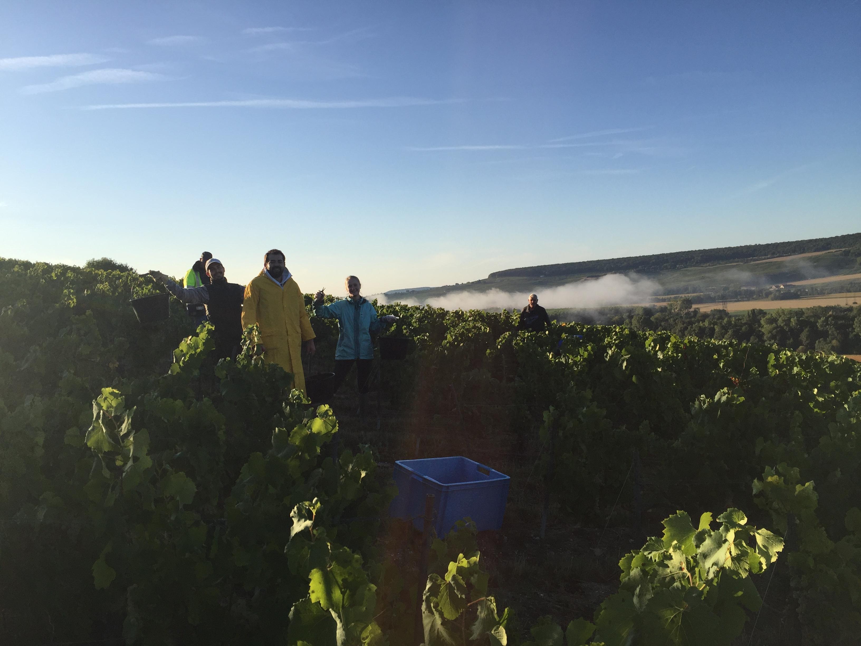 Harvest in Champagne